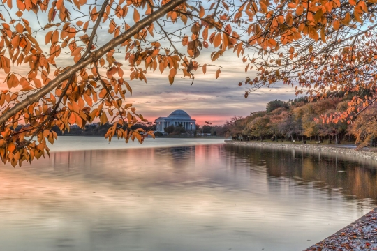 Cherry blossom trees during fall at the Tidal Basin in Washington, D.C.