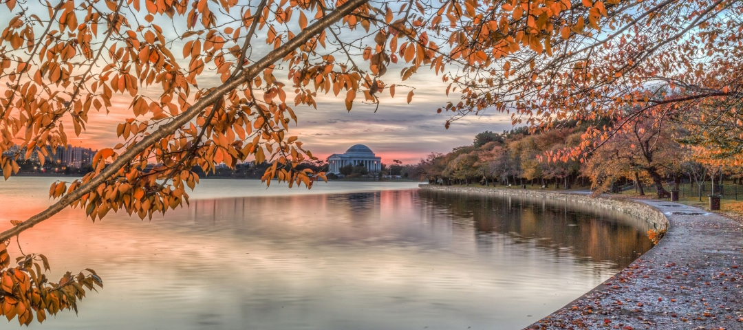 photo - cherry blossom trees in fall at the Tidal Basin in Washington, D.C.
